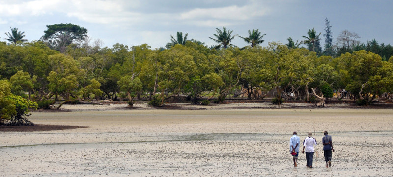 kenya-mangrove
